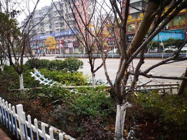 惊险!鄂州一小车不慎冲进花坛 连树都被撞断