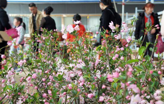 2017年江夏春季旅游推介会在武汉花卉博览园举行