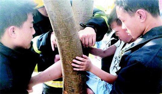 小男孩爬树摘枇杷 腿被卡进树缝里