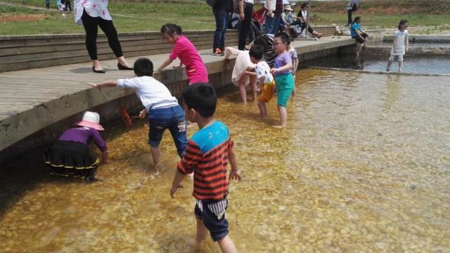 梁子湖畔薰衣草进入盛花期 引武汉市民纷纷前往观赏