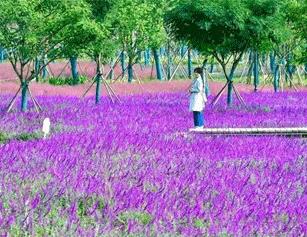 汉口江滩四期全面完工 近百亩花海盛装迎客