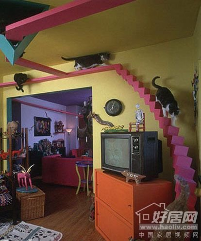 给猫一个充满宠物的家12个情趣家居创意设计有的北极人情趣特图片