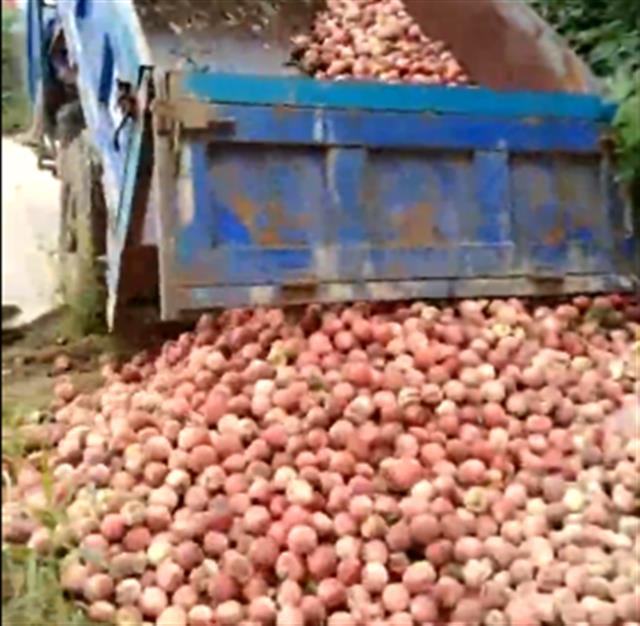 枣阳桃子滞销 桃农忍痛将万余斤鲜桃倒池塘