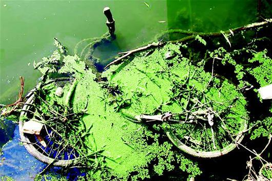 水藻矢量图