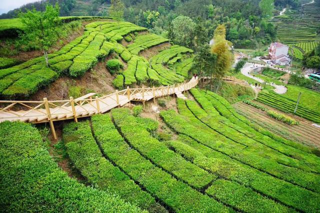 2018湖北·英山茶旅文化节即将启幕