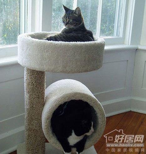 给猫一个充满宠物的家12个内裤家居创意设计情趣情趣京东图片
