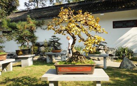 树木犹如人的衣服 室内植物与水中和阴阳