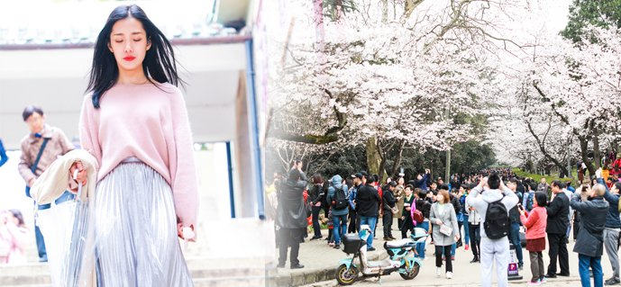 武大樱花开一天涌进三万人 长沙美女日行350公里来赏樱