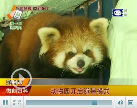 熊猫吹空调 猴子吃西瓜