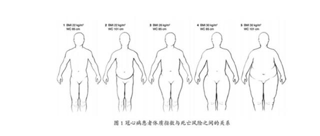 手绘体型对比图