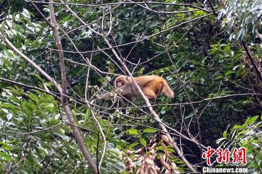 全力保护好野生动物栖息地