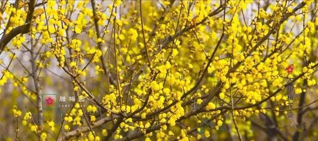 今年过年去哪儿玩?湖北发布这6条春节旅游路线