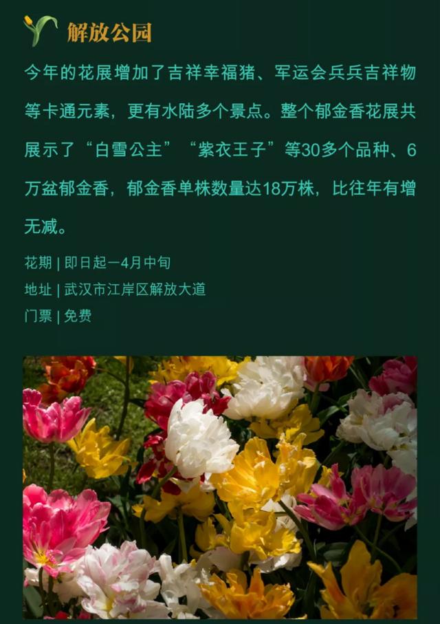 花期预告 ▏美!武汉此雕刻些地男的郁金香开了