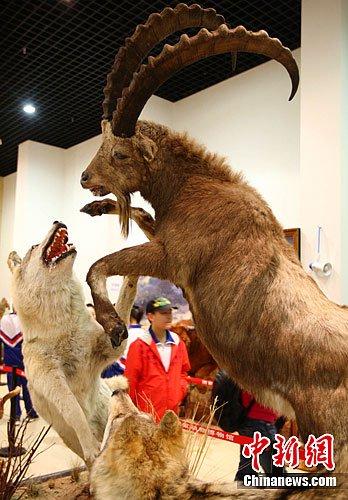 """人造""""动物世界""""吸引北京小观众"""