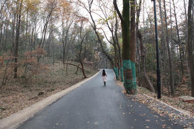 """东湖绿道二期建路""""躲着树走"""" 注重保护树木"""