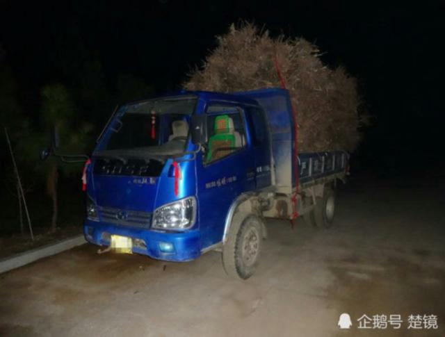 村民非法收购野生杜鹃花树苗近千株 运输时被抓