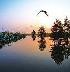 大美朱湖湿地