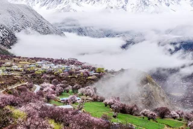 十里桃花万里春色 4月最高颜值的花海都在这里了
