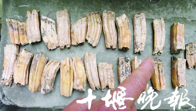 十堰男子江边捡到一堆神秘石头 专家鉴定后惊呆