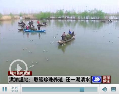 相关部门取缔珍珠养殖4000亩 还洪湖湿地一湖清水