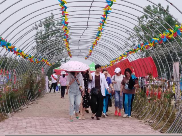 日游客量过千 小小桑葚节开启乡村振兴新篇章