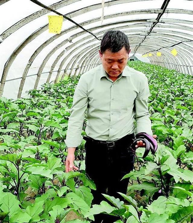"""云梦蔬菜打造""""绿色高质高效"""" 核心示范区辐射12万亩蔬菜板块"""