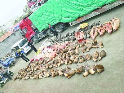 货车内藏126头野生保护动物 来历不明已被查处