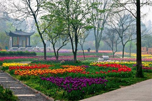 发现湖北之美 中科院武汉植物园