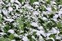 英山迎入冬以来首场大雪 气温降至3℃(图)