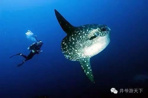 印尼的10大潜水胜地 你都去过了么?