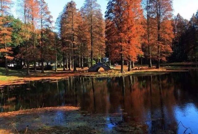 东湖绿道里的冬日美景  错过了可能要等一年