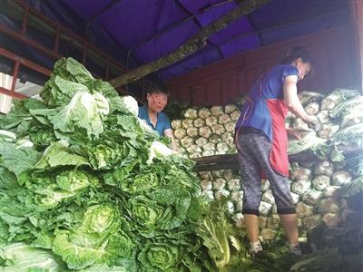 恩施本地蔬菜入市菜价下降不少 未来将继续下跌