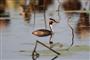 潜江迎来大批候鸟集群越冬 场面十分壮观