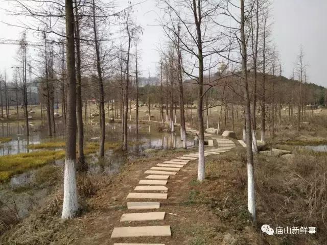 江夏藏龙岛国家级湿地公园 休闲溜娃好去处