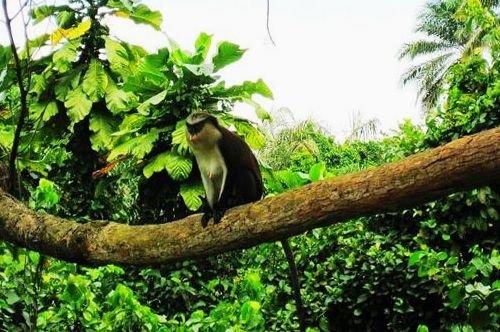 首手绘雨林图片