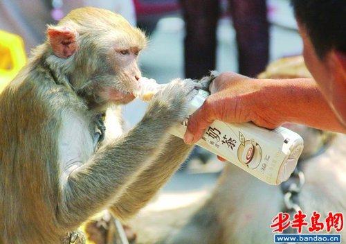 猴子杀人 闹着玩呢图片