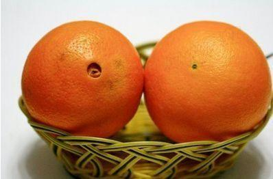 正值脐橙成熟季节 橙子这样挑才好吃