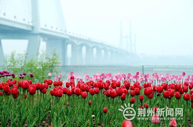 城区春季踏青赏花地图出炉 市民赶紧先睹为快