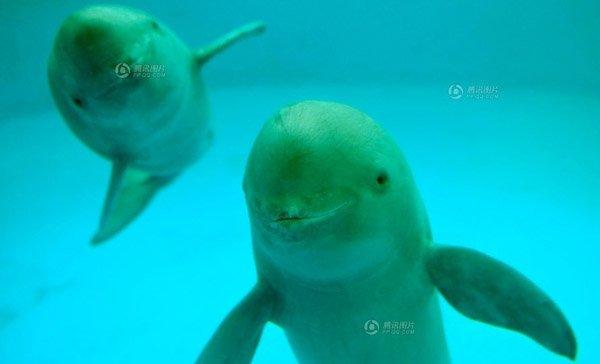 """江豚的""""微笑"""" 我们还能见多久"""