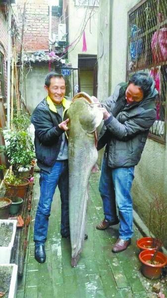 男子深夜钓起53斤大鲇鱼 长达1.5米通体灰黑