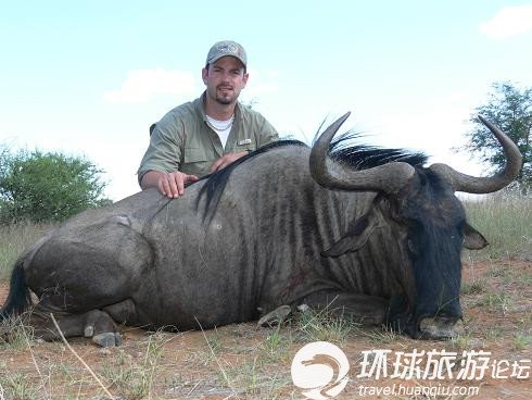 国外兴起狩猎之旅 非洲野生动物遭殃