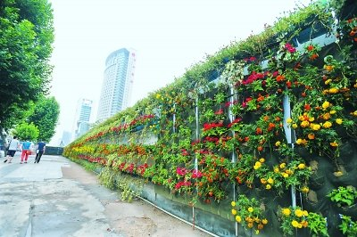 武汉一工地围墙变鲜花长廊 用万株鲜花装扮