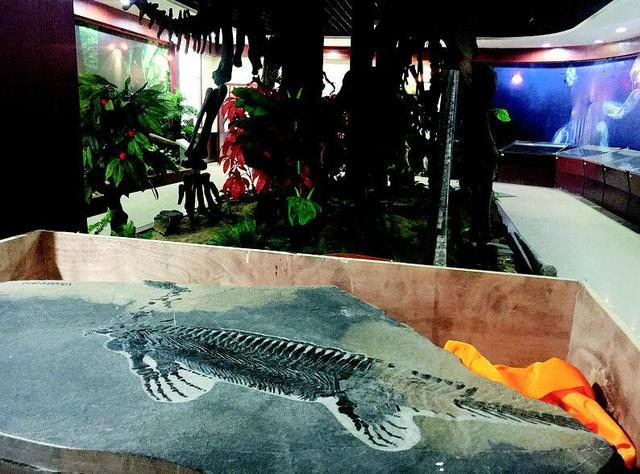 远古化石为远安带来旅游生机 蹚出乡村振兴路