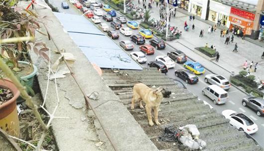 小狗爬上遮雨篷 众人联手用骨头将其救下(图)