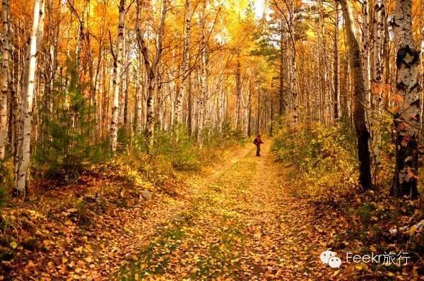 这里隐藏着秋日童话世界 现在计划出行最划算