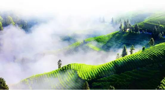 103个产业集群被划为湖北省重点 荆州市有11个