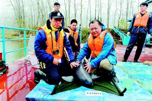人工饲养长江江豚成功回归自然 系全球首例
