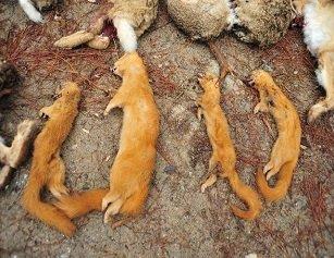 男子收购野生动物被查 民警放生4只濒危狗獾