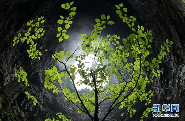 """#(环境)(3)湖北恩施:""""天坑""""生态之美"""