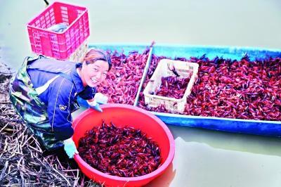"""小龙虾华丽化身农业、工业、服务业""""三栖明星"""""""
